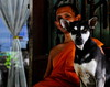 ,, Tinker Bell & Monk ,, (Jon in Thailand) Tags: monk blue orange green dog k9 tinkerbell eyes ears dogears dogeyes jungle reflection nikon nikkor d300 175528 watchingyou mrkindmonk street streetphotography streetphotographyjunglestyle littledoglaughedstories