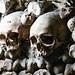 Paris Catacomb Skulls