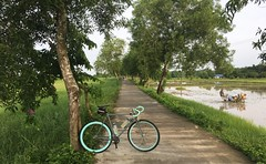 Myanmar, Yangon Region, Southern District, Seikgyikanaungto Township (Die Welt, wie ich sie vorfand) Tags: myanmar burma bicycle cycling surly steamroller yangonregion yangon rangoon southerndistrict seikgyikanaungtotownship seikgyikanaungto kanaungto seikkyikanaungto wetplough