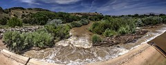 SADD downstream eastside (JoelDeluxe) Tags: middleriogrande mrg site tour nm newmexico joeldeluxe water bosque sand sanacacia diversiondam