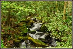 Mountain Waterfall - Explore #45 (Jerry Jaynes) Tags: gsmnp waterfall moss rocks trees greatsmokymountainsnationalpark northcarolina nc rhododendron tripodphotography explore nikkor1985vr