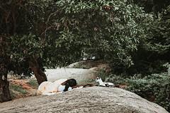 Tranquility. Mahabalipuram, India (Marji Lang Photography) Tags: india indianpeople indiansubcontinent mahabalipuram mamallapuram republicofindia rock tamilnadu travelphotography babygoat composition documentary goat goats green greenery humanandanimal indian lovely nap naping nature oneperson park people photography relaxing rest resting scenery sleeping southindia southindian streetphotography travel travelanddocumentaryphotography traveldestination trees woman