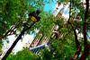 Barcelona's Sagrada Familia (Nicolay Abril) Tags: temploexpiatoriodelasagradafamilia sagradafamilia basílicadelasagradafamilia templeexpiatoridelasagradafamília basiliquedelasaintefamille saintefamillie holyfamily basilicaandexpiatorychurchoftheholyfamily basilicaoftheholyfamiliy antonigaudí gaudí antoniogaudí modernism modernisme modernismo modernistarchitecture arquitecturamodernista artnouveau barcelona barcelone españa espanya spain espagne spagna spanien cataluña catalunya catalonha catalonia catalogne katalonien catalogna lanterne laternen lanternes lanterns faroles lampposts lampioni farolas lampadaires fanals arquitectura architecture abre abres árbol árboles tree trees bcn