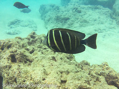Hanauma Bay 4 (venusnep) Tags: hanaumabay hanauma bay underwater tropicalfish tropical fish iphone watershot watershotpro hawaii snorkeling travel travelphotography may 2018