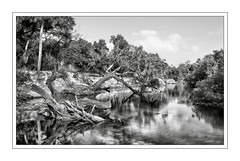 Shiny afternoon. (Jill Bazeley) Tags: econlockhatchee river seminole county florida orlando wild natural big little econ state forest equestrian trail hiking sony a6300 1018mm uprooted trees flooding monochrome landscape