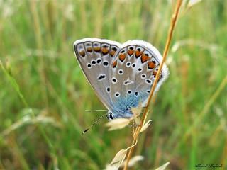 Butterfly 1337