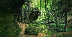 Mullerthal Trail Luxemburg (Rita Eberle-Wessner) Tags: wald forest felsen rocks trees bäume bach creek mullerthal mullerthaltrail trail wanderweg luxemburg luxembourg berdorf green grün canyon gorge felsenschlucht