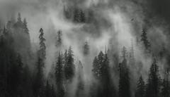 Mystical (mattymeis) Tags: olympic national park quinault rainforest mountains peak fog clouds sun eagle bird rrs nikon travel landscape black white matt meisenheimer