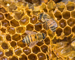 Some of Your Beeswax