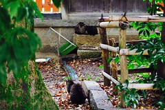 Today's Cat@2017-06-28 (masatsu) Tags: cat thebiggestgroupwithonlycats catspotting pentax mx1