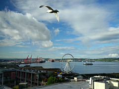 Elliott Bay from Lowell's (Ruth and Dave) Tags: elliottbay seattle lowells pikeplacemarket pikeplace view seagull gull flying sea bay cranes city ferriswheel dock sky clouds