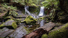 20170615_1903 (petetiller) Tags: petetiller petertiller tasmania landscape forest rainforest waterfall waterfalls