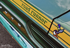 Follow The Cartoon (Hi-Fi Fotos) Tags: plymouth roadrunner decal mopar american vintage musclecar classiccar stripe detail cartoon bird green yellow trunk rear nikon d7200 sigma 18250 butler megacruise hififotos hallewell