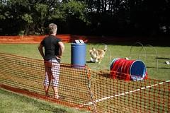 9 juli 2017 4 feet 4 fun (De foto's van Anne) Tags: lara cayenne pipra sheltie schotseherder collie