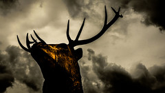 Grasmere (Mark Dickens) Tags: grasmere stag deer animal wildlife nature sculpture art woodcarving