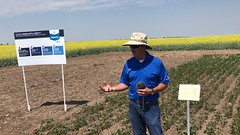IMG_1592 (AgWired) Tags: bayer cropscience showcase plot tour 2017 soybeans canola wheat cereals corn north dakota agwired zimmcomm new media chuck zimmerman