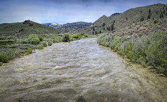 West Walker River (joe Lach) Tags: westwalkerriver walkerriver rushingwater flowingwater vegetation stream alpine mountain highway395 nevada joelach