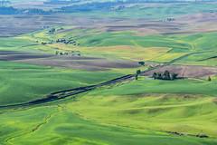 Palouse Hills (Endangered71) Tags: palousehills palouse steptoebuttestatepark steptoebutte rollinghills hills farm wheat