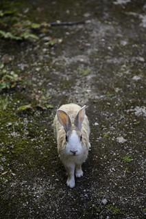 Denizen of Rabbit Island