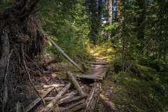 Unmaintained Trail (writing with light 2422 (Not Pro)) Tags: tahomacreektrail trailunmaintained decay abandonedplaces mountrainiernationalpark westsideroad bridge forest washingtonstate richborder sonya77