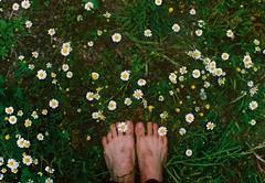 Being barefoot on the ground makes me feel so alive. (Hijo de la Tierra.) Tags: film filmexpired 35mm fujisuperia iso100 feet chamomile flower spring countryside nature minimalist hijodelatierra agustíngaleano pachamama