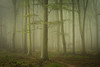Friston Forest - June 22nd (Edd Allen) Tags: fristonforest friston forest trees tree treescape mist fog nikond610 nikon d610 70200mm landscape country countryside atmosphere atmospheric sunrise uk eastsussex woods woodland serene bucolic melancholy foliage leaves spring summer