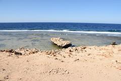 DSC_0164 (russellfenton) Tags: egypt marsaalam nikon nikon7200 7200 corayabeach steigenberger snorkelling sea boat