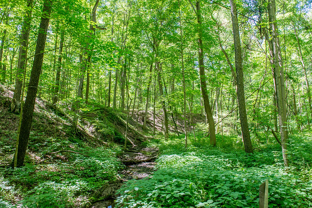 Robb Hidden Canyon Nature Preserve - June 21, 2017