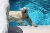 水族館41 (ののリサを信じろ) Tags: 水族館 白熊 カエル 蛙 シロクマ なまはげ 獅子舞 神社 桜 鯉のぼり アシカ