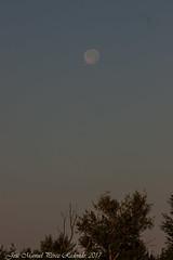Milà negre sota la lluna (Thanks for +300.000 views) Tags: negre milà