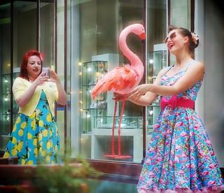 182/365 Pretty Flamingo