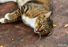 Free and restless (gunman47) Tags: 2017 airport asia asian crescent dakota east estate improvement mountbatten road sg sit singapore south trust abandoned bloc cat cats desolate empty en landscape old photography redevelopment restless stray street tabby urban animal