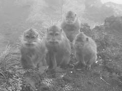 Monos_Volcan_bali (ruben25x12) Tags: bali indonesia tegalalang riceterrace arroz terraza templo uluwatu tanalot tanahlot