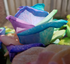 20170630_202553 (Daniella Velings) Tags: roses bloemen mooi rozen beautiful flowers rainbowcolouredroses rainbow colourful kleurrijk multicolored artificiallycoloured