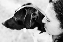 Animal Love (mripp) Tags: art kunst animal love tierliebe dog dogs hund hunde leica q abstract symbol