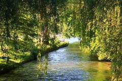Green paradise (Anna Mizi) Tags: münchen park sooc munich green