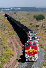 ATSF 896 East at Gonzales, NM (thechief500) Tags: atsf gallupsubdivision railroads nm newmexico atchisontopekaandsantafe santaferailway