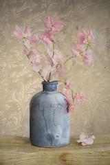 Lathyrus (.MARTINE.) Tags: martine nikond800 bloemen lathyrus vaasje bankje moa behang wallpaper dubbelebelichting doubleexposure