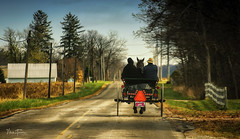 Country Roads (mturnau) Tags: amish amishbuggy willshireohio ohio country countryroad