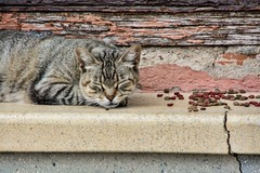 Sleep in the street (Peideluo) Tags: cat street sleep