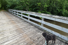 DSC_0195.jpg (turn off your computer and go outside) Tags: 2017 albanywildlifearea greencounty june sugarriverstatetrail wi wisconsin blackdog bridge latespring nature niceweather outdoors partlycloudy rescuedog terrier