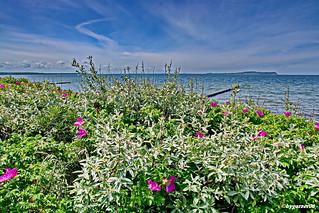 Weitblick zur Insel Hiddensee-Aussichtspunkt Dranske-Bug