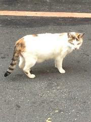 老臭臉 (未來風景) Tags: 屎面 喵 猫 貓 meow neko ねこ cat 고양이 臭臉