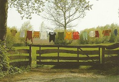Clothesline (Tweeling17) Tags: clotheslines waslijntje2004