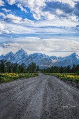 GTNP Road 1 (Jason Blalock) Tags: nationalpark nationalparks park parks nationalparkservice nps pilgrim creek wyoming grandteton grandtetons grandtetonnationalpark grandtetonsnationalpark gtnp pilgrimcreek dirtroad gravelroad mountains wildflowers arrowleafbalsamroot