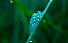 Beauty of Nature (Andrew Goldman) Tags: amazing awesome gorgeous beautiful beauty nature like follow following enjoy water drops grass green forest park sunshine love god believe what you see photo picture