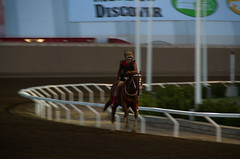 Stampede Indigenous Relay Race (pokoroto) Tags: stampede indigenous relay race horse rider people calgary カルガリー アルバータ州 alberta canada カナダ 7月 七月 文月 shichigatsu fumizuki bookmonth 2017 平成29年 summer july