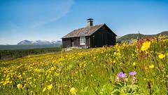 IMGP8511 (jarle.kvam) Tags: wildflowers oldhouse mountain flowers norway valdres støl seter sæter friluftsliv