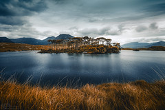 Connemara Derryclare Lough (steinmetznicolas) Tags: 2017 connemara irlande juin landscape ireland water lac pine island derryclare lough nikon d610 1635 cloud