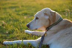 letzte Reise (Pixelkids) Tags: anton hund